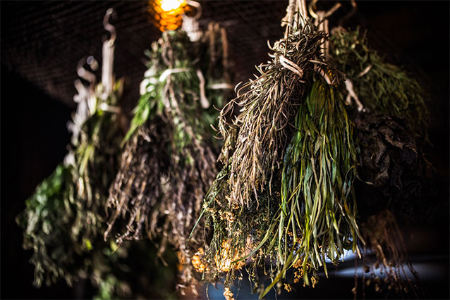 Sprigs of dried plant bundles hanging on a rack inside Public House Kitchen.